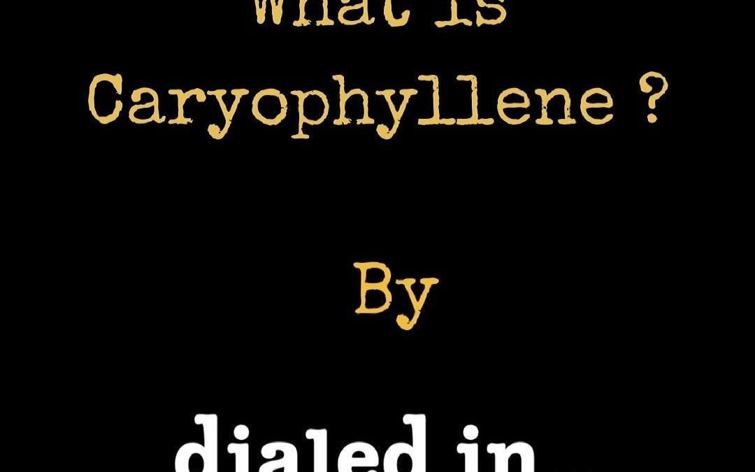 What is Caryophyllene?